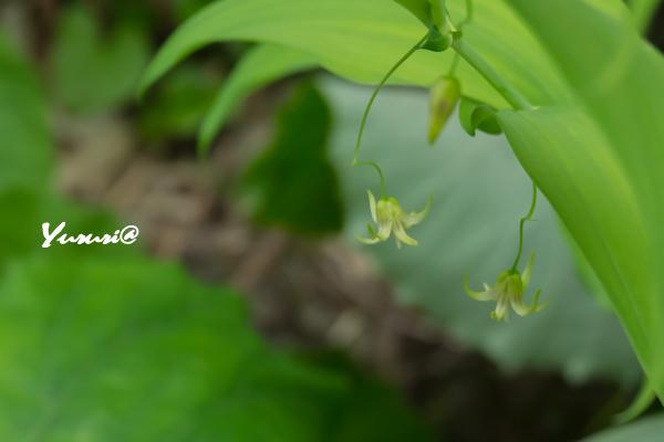 八幡平-16.jpg