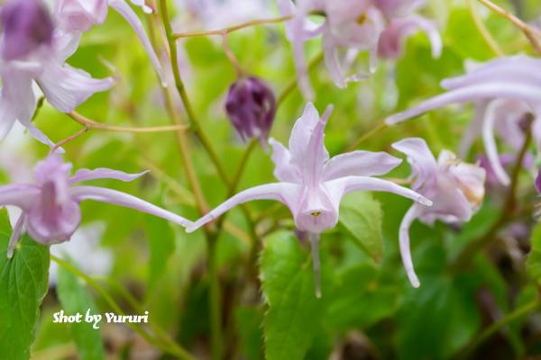 庭の花-1.jpg