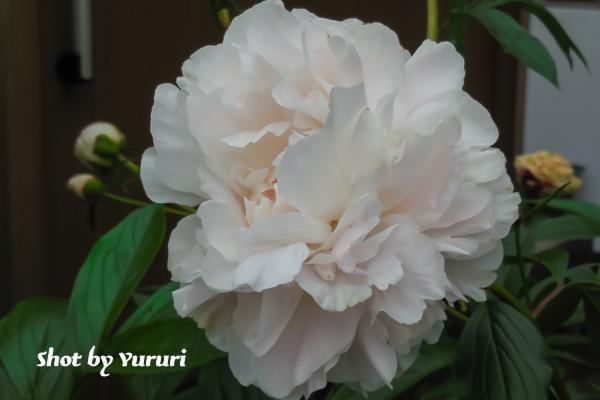 庭の花 2-1.jpg